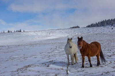Старопланиски коне